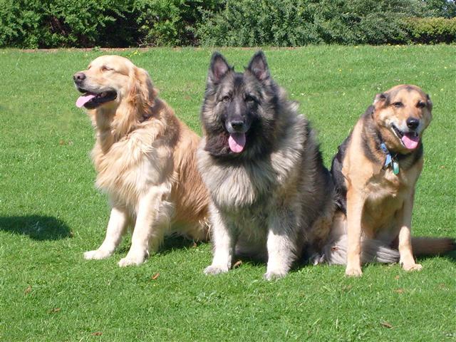 rotherham pet minder pet boarding dog walking in maltby rotherham